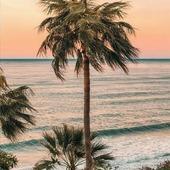 Muchas ganas de esto 🧡🌴🤲 Alguien más está igual?* * * * * #acualquierotraparte #escapada #playa #beachlover #primavera #mar #palmeras #relax #naturaleza #sunset #pinterest #beautiful #viajar #fridaymood #mood #viernes