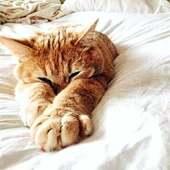 Lunes pasado por agua superado 🤫😴 Toca sofá y mantita!☺️* * * * * #buenasnoches #petlovers #instacats #catlover #gatito #pets #adormir #bonanit #babykitty #gatete #cutecats #pinterest #catlovers #santgervasi #elputxet #barcelona #animallover