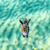 Alguien más con ganas de playa y verano??? 🐢🧡🌊 🌴☀️🐚* * * * * #animallover #beach #playa #babyturtle #tortuguita #tortuga #naturelover #pinterest #oceano #santgervasi #elputxet #barcelona #turtle #mar #freedom #beauty #inspo